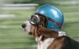 Motorcycle Helmet Fitting Guide