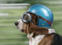 Motorcycle Helmet Fitting Guide